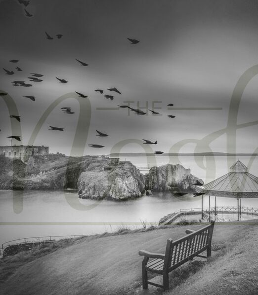 The Birds and the Bandstand